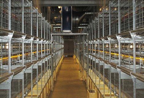 Tavuk Çiftliği Nasıl Kurulur Maliyeti Nedir
