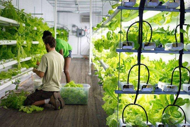 topraksız tarım nasıl yapılır